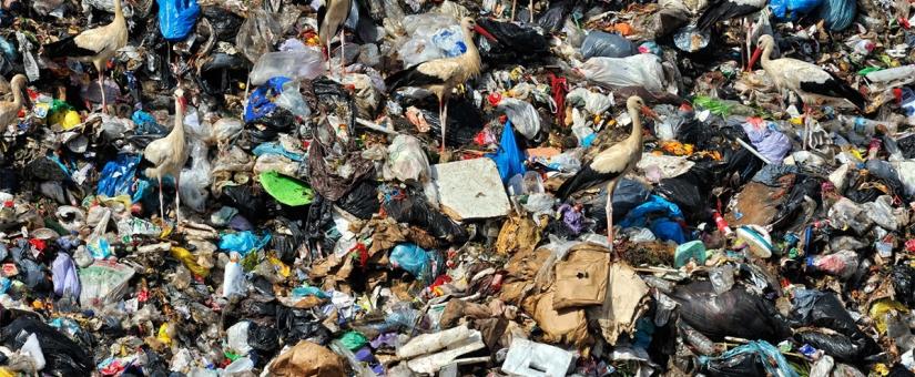 Реформа об переработке и утилизации отходов производства и потребления 2019 года